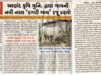 આણંદ કૃષિ યુનિવર્સીટી દ્વારા ગાયની નવી નસ્લ 'ડગરી ગાય' રજુ કરાશે