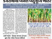 ખેડૂતોના ખેતરમાં કેળ પાકના કચરામાંથી બનશે બહુમૂલ્ય ખાતર